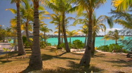 Stock Video Footage of Tahitian palm trees gently blow in the wind with turquoise water in the