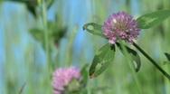 Wildflowers in Field 3 Stock Footage