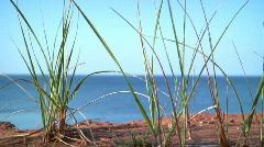 Grass in red soil overlooking ocean Stock Footage