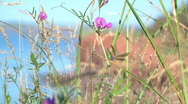 Stock Video Footage of Flowers overlooking cliff and ocean