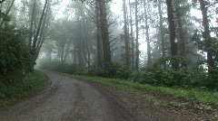 North coast redwood road-1 Stock Footage