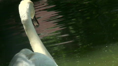 Swan swimming on the water Stock Footage