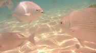 Stock Video Footage of Swimming with Fish