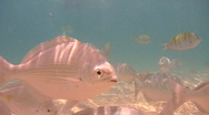 Stock Video Footage of Tropical Fish 1