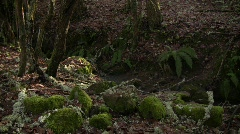 Small Stream Stock Footage