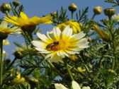 Bees and Flowers 09 Slow Motion x7 Stock Footage
