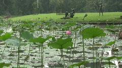 Pond of Lotus in Botanic Garden Stock Footage