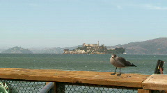 Alcatraz to Sea Gull Zoom - 01 Stock Footage