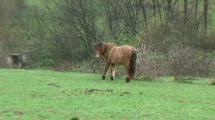 A Horse Eats Grass - At Rural Ohio Farm - stock footage
