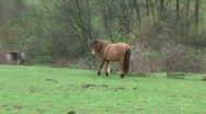 Stock Video Footage of A Horse Eats Grass - At Rural Ohio Farm