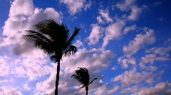 Time lapse clouds and palms Stock Footage