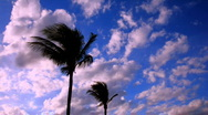 Stock Video Footage of Time lapse clouds and palms