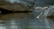 Creek background fish jump Stock Footage