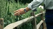 Man running his hand through wheat field Stock Footage