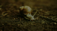 Stock Video Footage of Snail (HD)