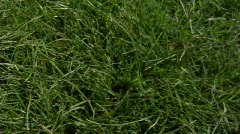 Background Texture long grass Stock Footage