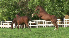 Beautiful Horses and foal - stock footage