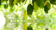 Green leaves background in sunny day, shallow focus  Stock Footage