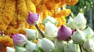 Lotus Flowers at Buddhist Temple Stock Footage