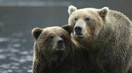 Bear  Stock Footage
