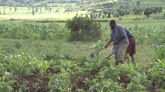 Men work in their field in Tanzania Stock Footage