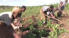 Tanzania: Working in the fields - stock footage