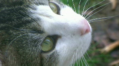 Cute Cat Looking Around - At Rural Ohio Farm Stock Footage