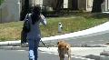 Woman Walking Dog Footage