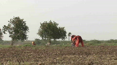 Women palwing field dressed in traditional  Indian  cloth   Stock Footage