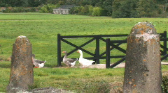 Stock Video Footage of Geese at a french country Chateau (sequence)