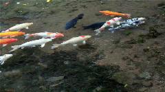 Fish closeup Stock Footage