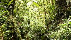 Tilt down to a rainforest stream Stock Footage