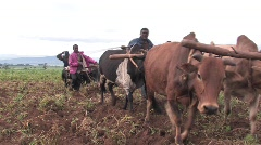 Plowing a Field in Tanzania - stock footage