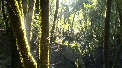 forest morning sun ws - stock footage