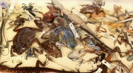 Stock Video Footage of Preserved specimens of reptiles and amphibians