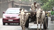 Stock Video Footage of Bull cart in mumbai busy traffic, India