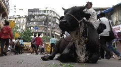 Bull at busy road in Mumbai, India Stock Footage