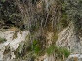 Waterfalls ZC HS03 Slow Motion x7 Tilt Down Stock Footage