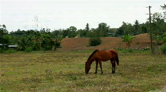 Horse in a farm Stock Footage