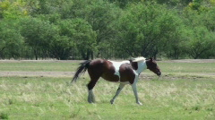Horse Trot Stock Footage