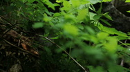 Green Leaves in Forest Rack Focus Stock Footage