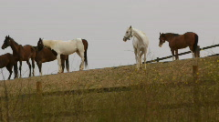 Horses on Ranch Hill Stock Footage