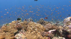Colourful Coral Reef POV - stock footage