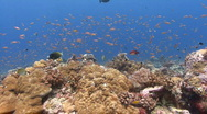 Stock Video Footage of Colourful Coral Reef POV