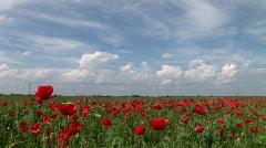 Poppy in the Field Stock Footage