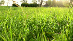 Grass ae Stock Footage