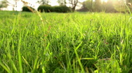Stock Video Footage of grass ae