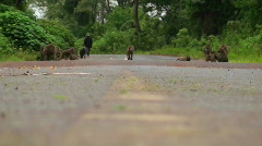 Baboons play on a road in Africa. Stock Footage