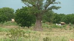 Malawi: baobab tree and people walking Stock Footage