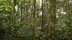 Interior of rainforest pan - stock footage